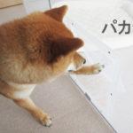 柴犬コマリ ペットフェンス