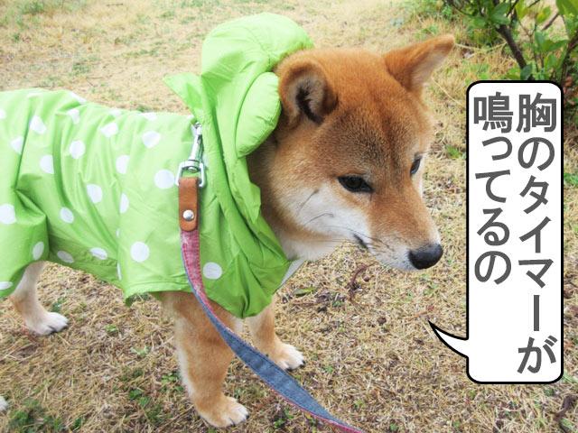 柴犬コマリ ウルトラマン