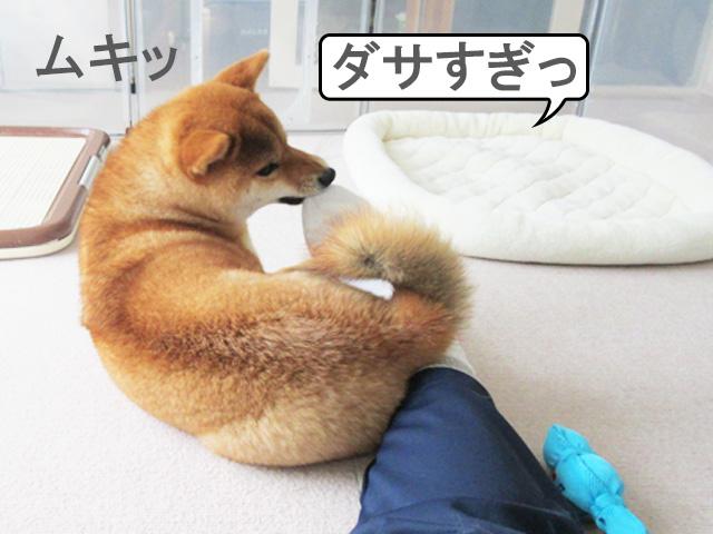 柴犬コマリ 靴下