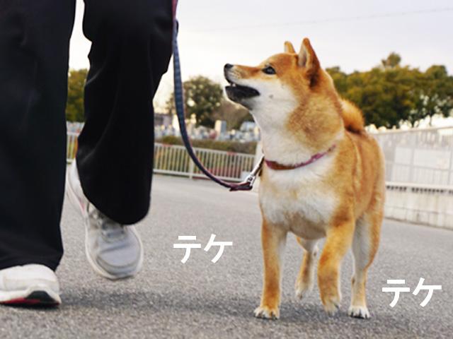 柴犬コマリ ヒール