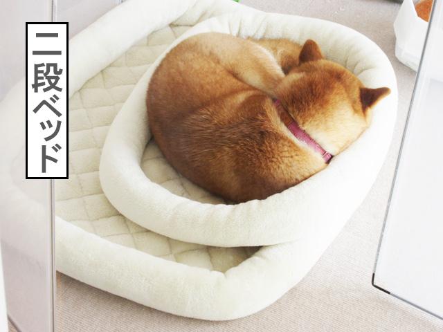 柴犬コマリ 二段ベッド