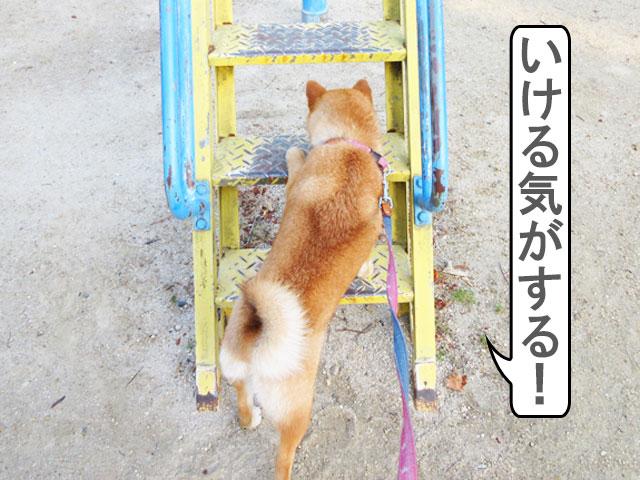 柴犬コマリ 滑り台