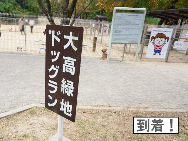 柴犬コマリ 大高ドッグラン