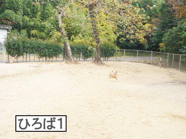 柴犬コマリ 大高緑地ドッグラン