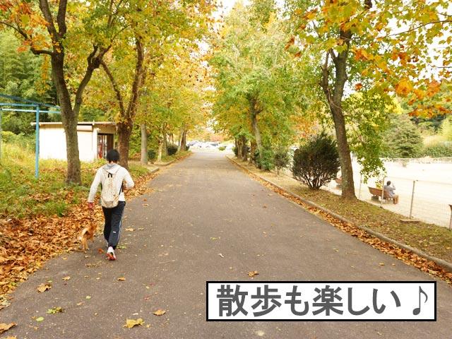柴犬コマリ 大高緑地
