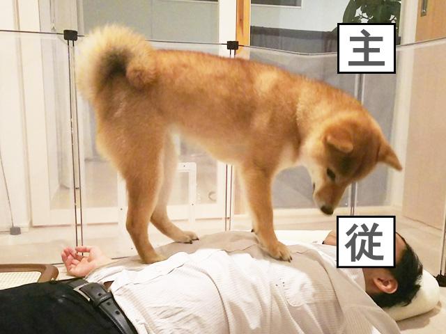 柴犬コマリ 主従関係