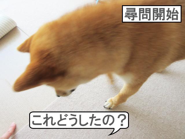 柴犬コマリ マット