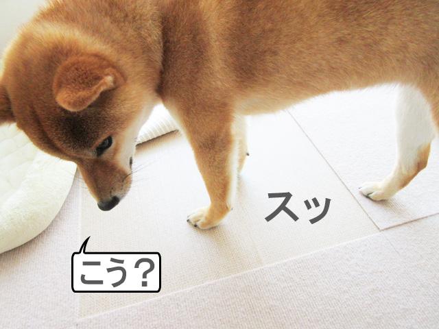 柴犬コマリ クッションフロア