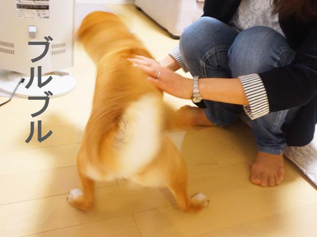 柴犬コマリ 柴ドリル