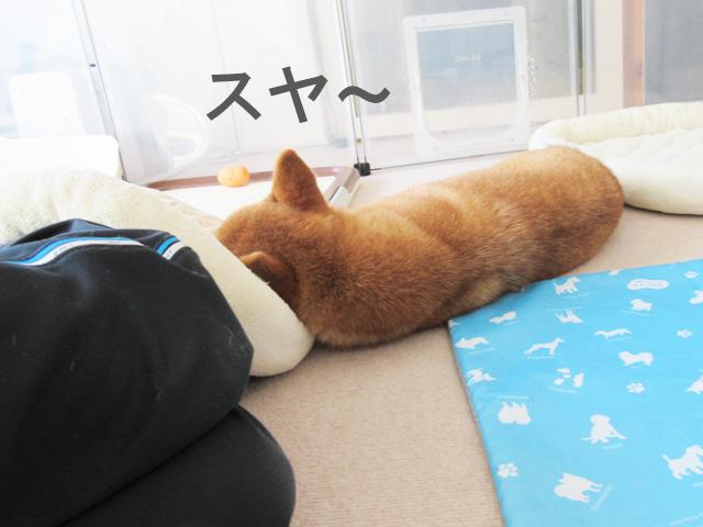 柴犬コマリ 冷却マット