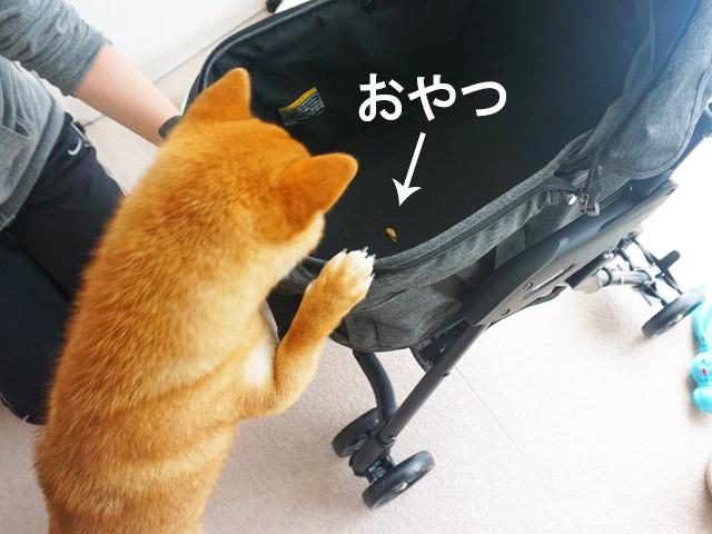柴犬コマリ ペットカート