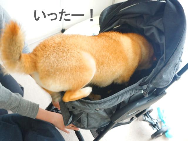 柴犬コマリ ドッグバギー