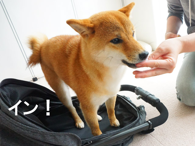柴犬コマリ ペット用カート