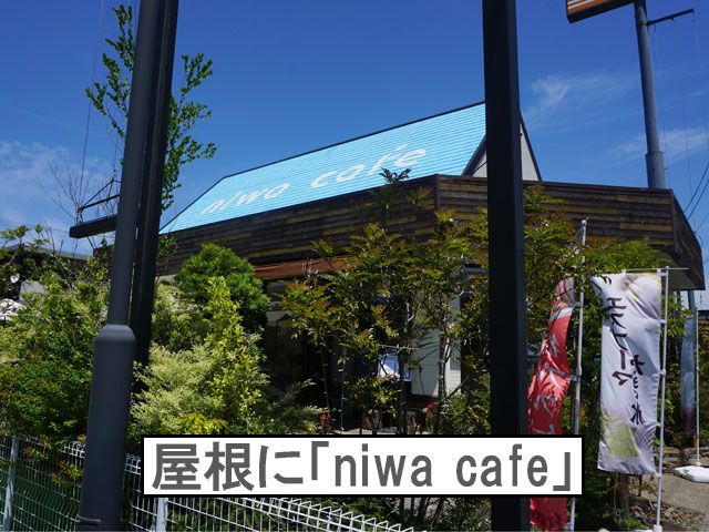 柴犬コマリ niwacafe