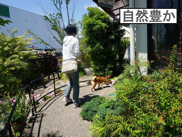 柴犬コマリ niwa cafe