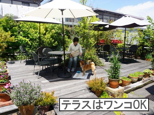 柴犬コマリ niwacafe テラス