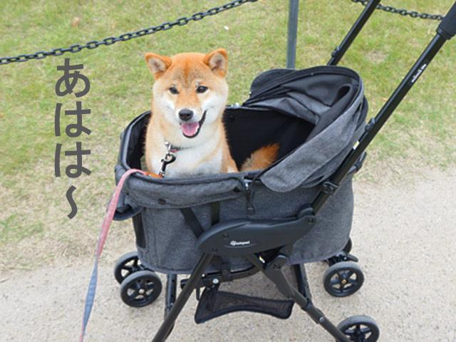 柴犬コマリ 犬用カート