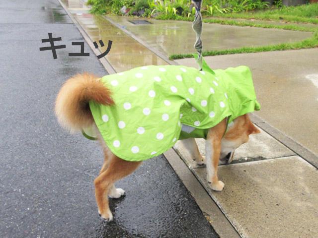 柴犬コマリ 犬用カッパ