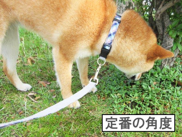 柴犬コマリ 匂い