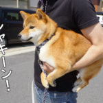 柴犬コマリ セカンドバッグ