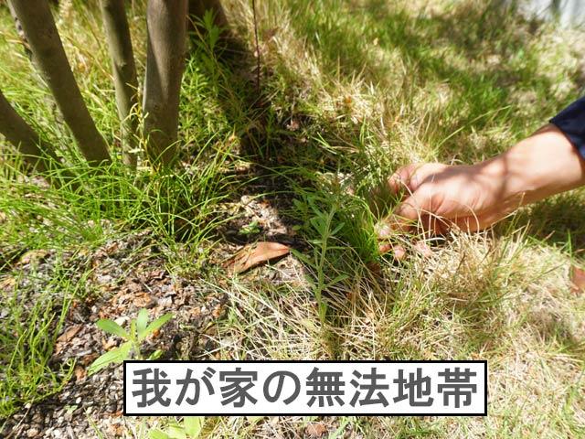 柴犬コマリ 犬が遊べる庭