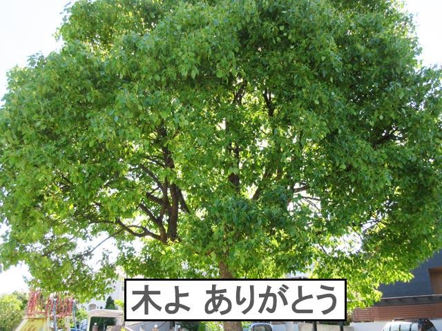 柴犬コマリ 公園