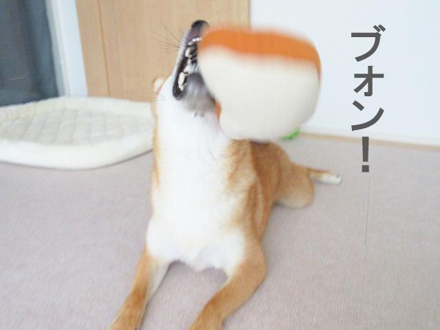 柴犬コマリ 食パン おもちゃ