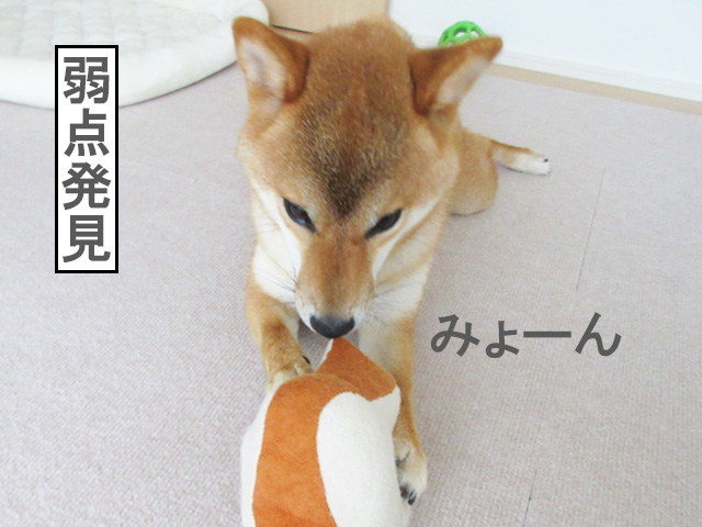 柴犬コマリ パン おもちゃ