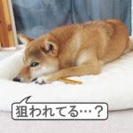 柴犬コマリ 焼き芋スティック