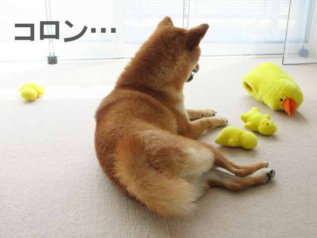 柴犬コマリ 鳥のおもちゃ