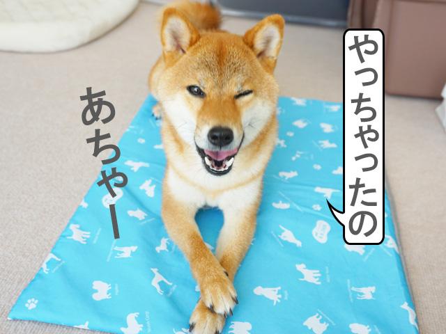 柴犬コマリ ひんやりマット