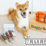 柴犬コマリ doggybox