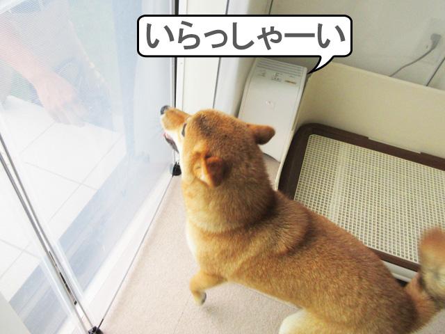 柴犬コマリ リフォーム