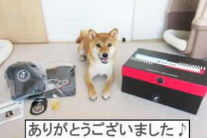 柴犬コマリ TikTokオーディション