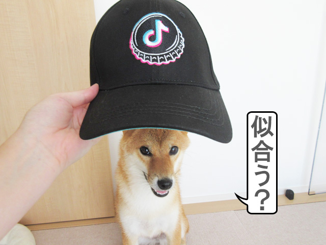 柴犬コマリ TikTok賞品