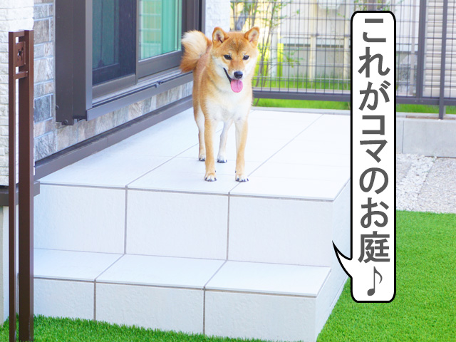 柴犬コマリ 庭