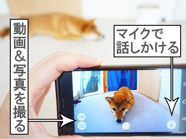 柴犬コマリ ファーボ furbo