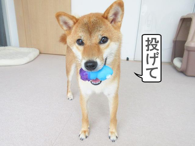 パピーフレンズ キャット 柴犬コマリ
