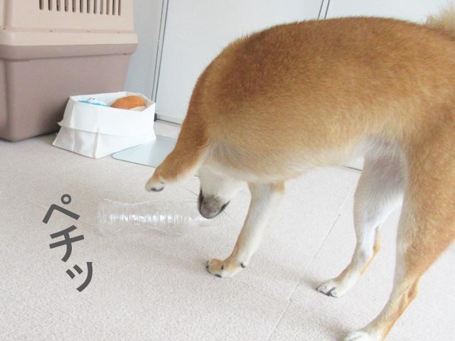 柴犬コマリ ペットボトル