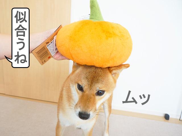 柴犬コマリ カボチャ ぬいぐるみ