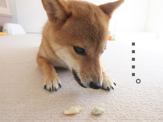 柴犬コマリ 犬用クッキー