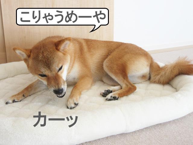 柴犬コマリ ワンコクッキー