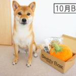 柴犬コマリ ドギーボックス