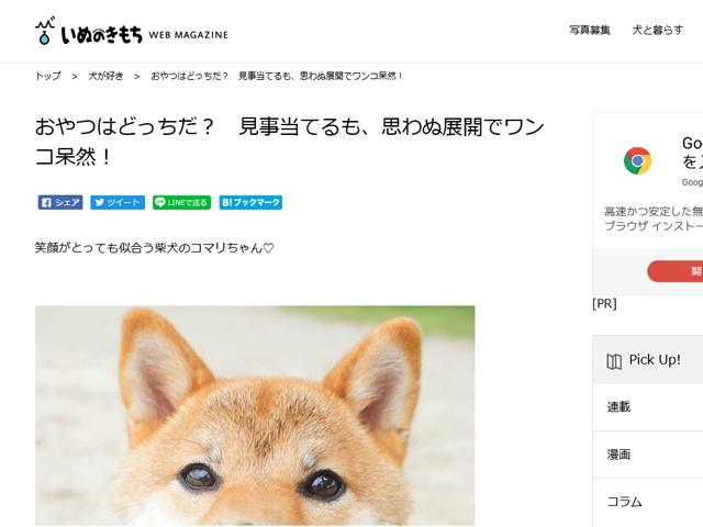 柴犬コマリ いぬのきもち WEB MAGAZINE