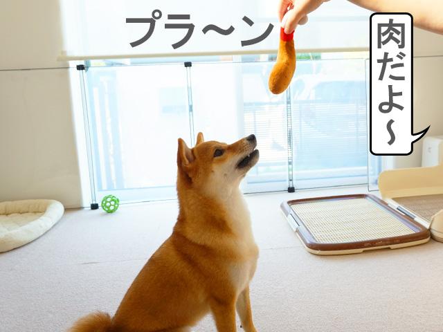柴犬コマリ 肉