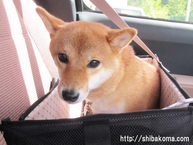 柴犬コマリ ドライブボックス