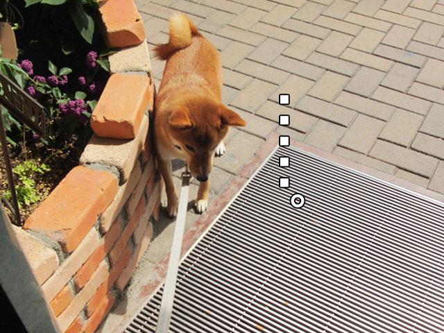 柴犬コマリ 金網