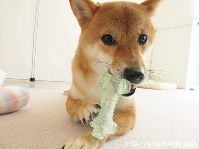 柴犬コマリ おもちゃ 骨