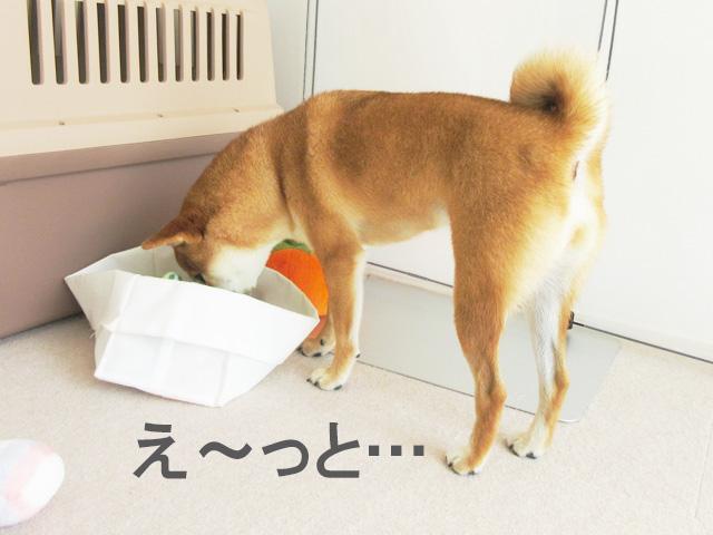 柴犬コマリ おもちゃ選び