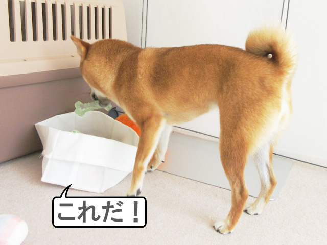 柴犬コマリ 骨 おもちゃ